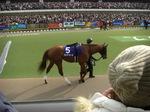東京盃の予想(有力馬のパドック写真)