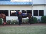 浦和記念−活躍馬のパドック写真